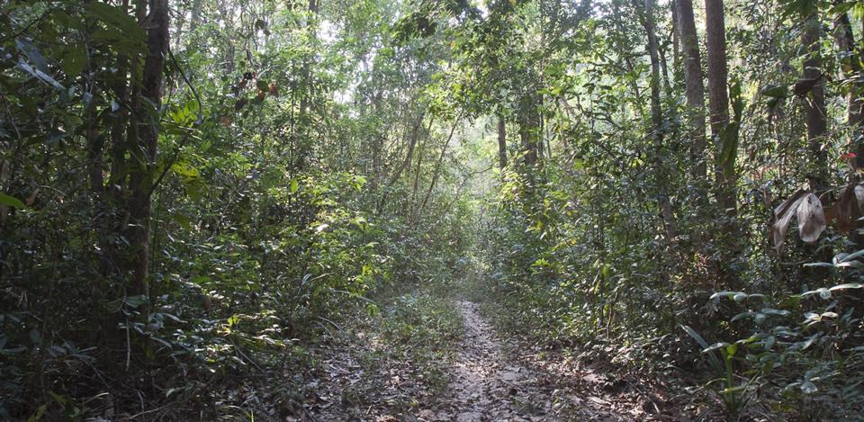 forest-habitat-koh-ker